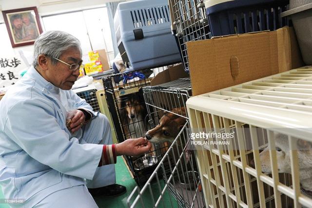Bệnh viện dành cho thú cưng nở rộ tại Nhật Bản - Ảnh 3.