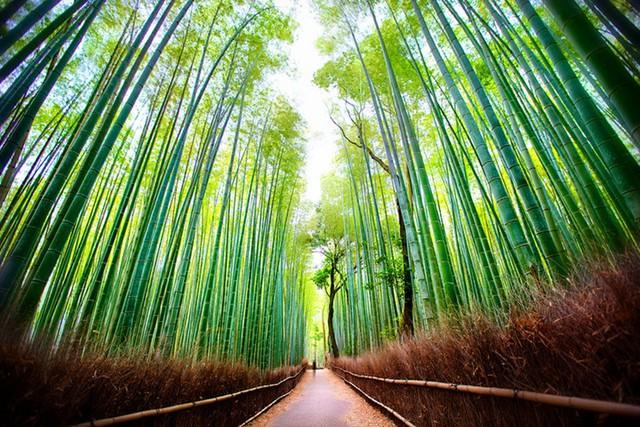 Ngất ngây với những điểm chụp ảnh đẹp nhất Nhật Bản - Ảnh 12.