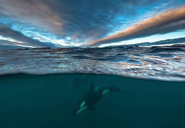 Ấn tượng những bức ảnh đẹp về cá voi ở Bắc Cực - Ảnh 3.