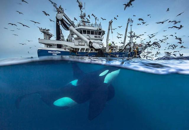 Ấn tượng những bức ảnh đẹp về cá voi ở Bắc Cực - Ảnh 9.
