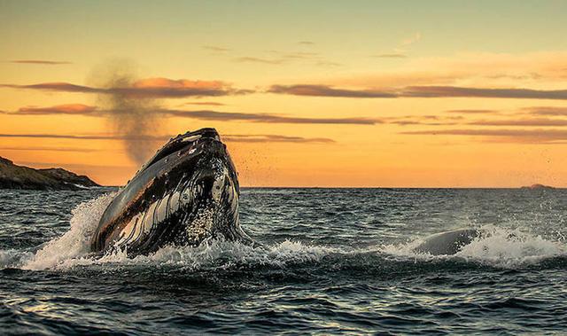 Ấn tượng những bức ảnh đẹp về cá voi ở Bắc Cực - Ảnh 8.