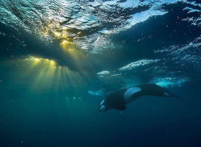 Ấn tượng những bức ảnh đẹp về cá voi ở Bắc Cực - Ảnh 7.