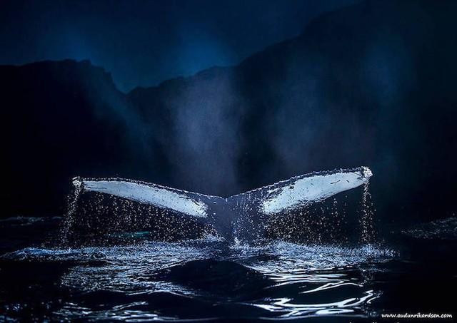 Ấn tượng những bức ảnh đẹp về cá voi ở Bắc Cực - Ảnh 10.