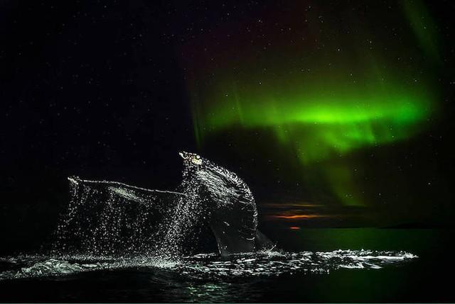 Ấn tượng những bức ảnh đẹp về cá voi ở Bắc Cực - Ảnh 1.