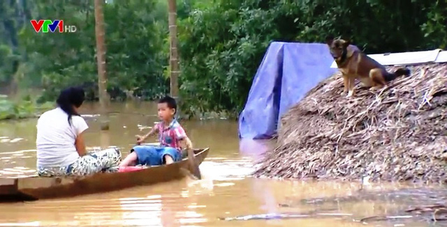 Sau bão lụt, nông dân miền Trung cần hỗ trợ cây, con giống - Ảnh 1.