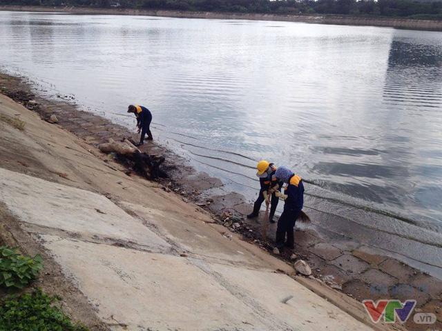 Cá chết trên hồ Linh Đàm đã được thu gom để mang đi xử lý - Ảnh 3.