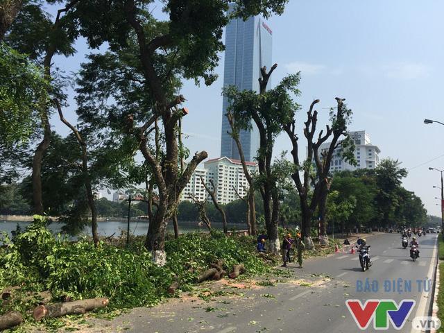 Hà Nội dịch chuyển 24 cây cổ thụ trên phố Kim Mã - Ảnh 1.