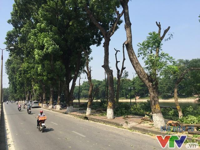 Hà Nội dịch chuyển 24 cây cổ thụ trên phố Kim Mã - Ảnh 2.