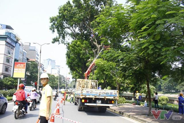 Dịch chuyển hàng cây xanh phố Kim Mã để xây đường sắt Nhổn – ga Hà Nội - Ảnh 8.
