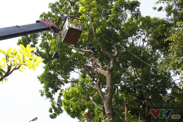 Dịch chuyển hàng cây xanh phố Kim Mã để xây đường sắt Nhổn – ga Hà Nội - Ảnh 7.