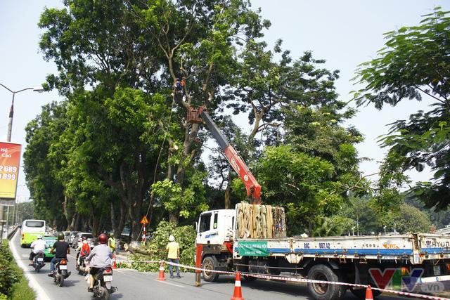 Dịch chuyển hàng cây xanh phố Kim Mã để xây đường sắt Nhổn – ga Hà Nội - Ảnh 5.