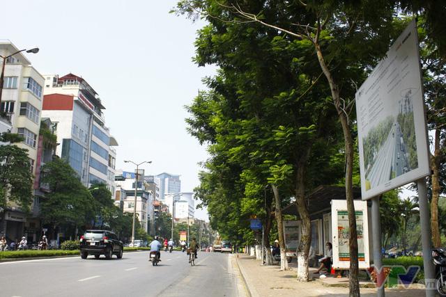 Dịch chuyển hàng cây xanh phố Kim Mã để xây đường sắt Nhổn – ga Hà Nội - Ảnh 3.