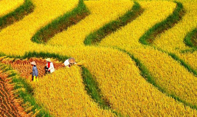 Ruộng bậc thang Việt Nam vào danh sách cảnh quan đẹp đến khó tin - Ảnh 1.