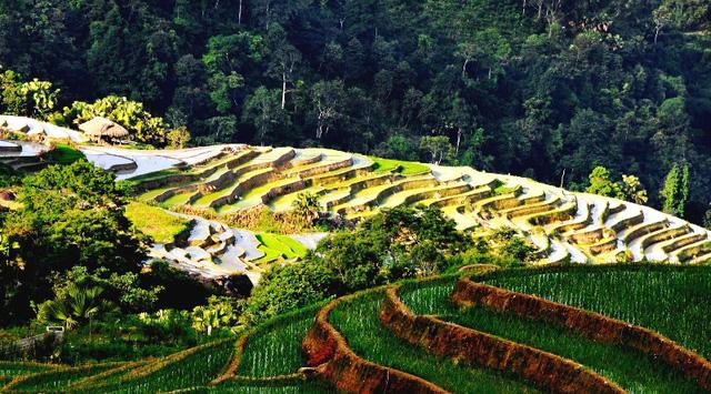 Ruộng bậc thang - Điểm đến hấp dẫn ở Hà Giang - Ảnh 4.