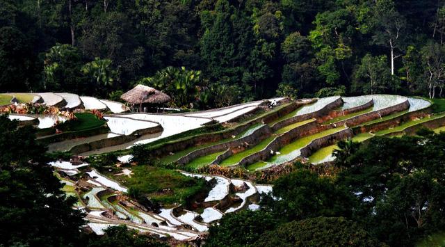 Ruộng bậc thang - Điểm đến hấp dẫn ở Hà Giang - Ảnh 7.