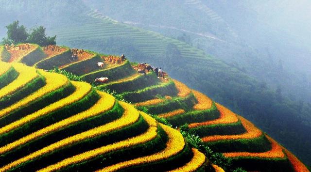 Ruộng bậc thang - Điểm đến hấp dẫn ở Hà Giang - Ảnh 3.