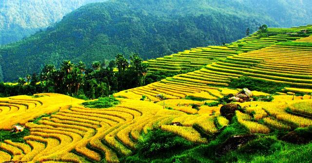 Ruộng bậc thang - Điểm đến hấp dẫn ở Hà Giang - Ảnh 2.