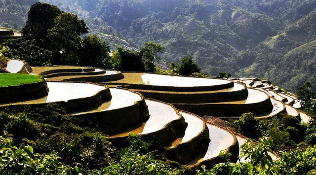 Ruộng bậc thang - Điểm đến hấp dẫn ở Hà Giang - Ảnh 6.