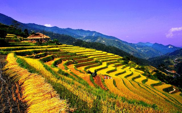 Ruộng bậc thang Việt Nam vào danh sách cảnh quan đẹp đến khó tin - Ảnh 4.