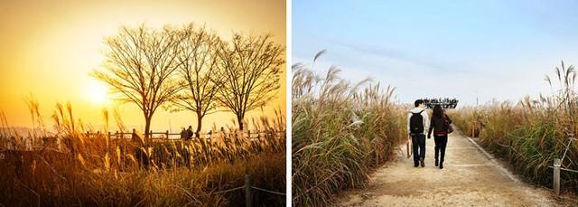 Tuyệt đẹp khung cảnh mùa thu lá đỏ tại Hàn Quốc - Ảnh 6.