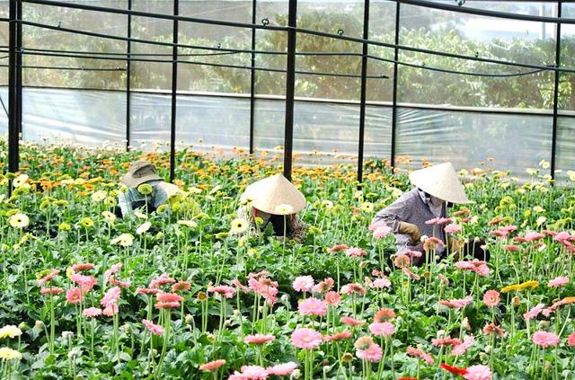 Người trồng hoa Đà Lạt bị ép giá khi bán ký gửi - Ảnh 1.