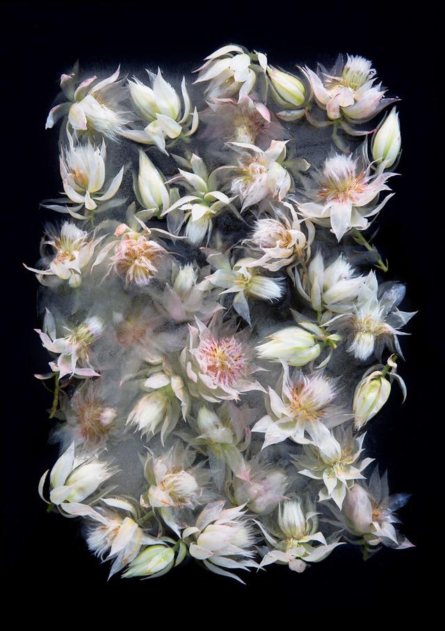 Ngắm vẻ đẹp mong manh của những bông hoa đóng băng - Ảnh 6.