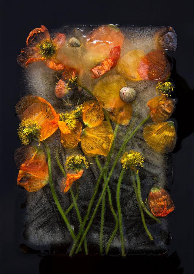 Ngắm vẻ đẹp mong manh của những bông hoa đóng băng - Ảnh 5.