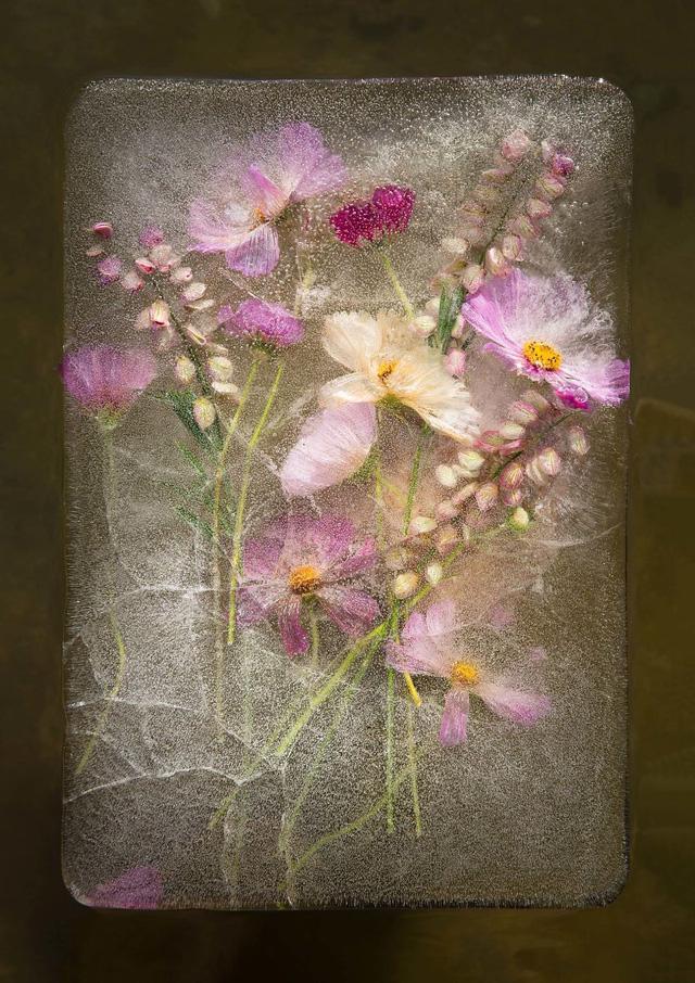 Ngắm vẻ đẹp mong manh của những bông hoa đóng băng - Ảnh 1.