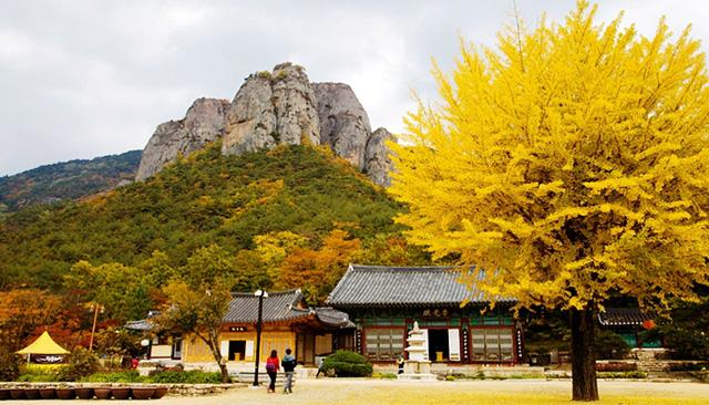 Tuyệt đẹp khung cảnh mùa thu lá đỏ tại Hàn Quốc - Ảnh 13.