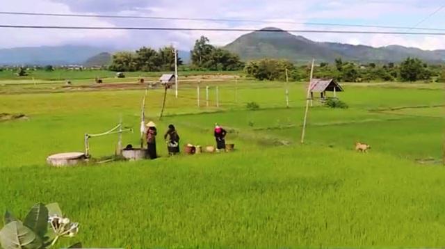 Nông dân ở chảo lửa Gia Lai tự khoan giếng... lấy nước trồng lúa - Ảnh 1.
