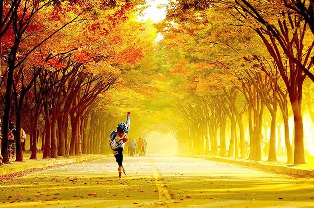 Tuyệt đẹp khung cảnh mùa thu lá đỏ tại Hàn Quốc - Ảnh 1.
