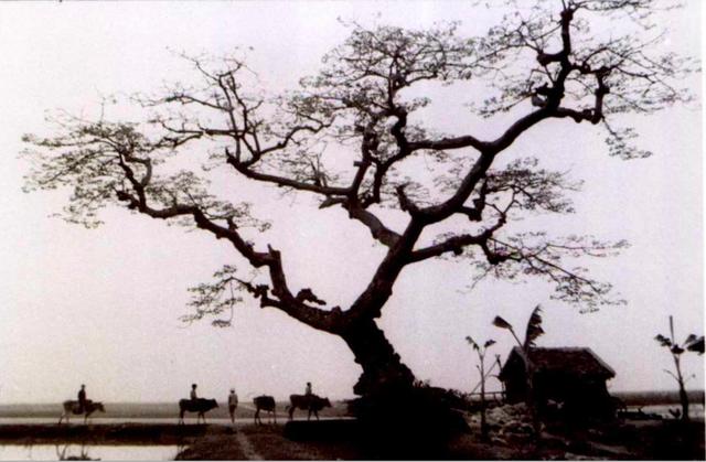 Nhiếp ảnh gia Lê Vượng và những hoài niệm về một Hà Nội xưa - Ảnh 3.