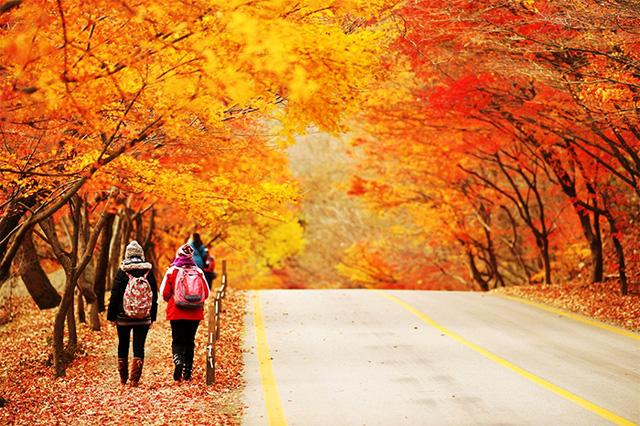 Tuyệt đẹp khung cảnh mùa thu lá đỏ tại Hàn Quốc - Ảnh 12.