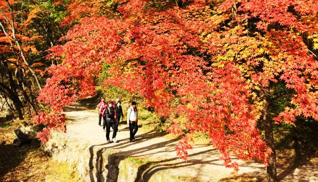 Tuyệt đẹp khung cảnh mùa thu lá đỏ tại Hàn Quốc - Ảnh 11.