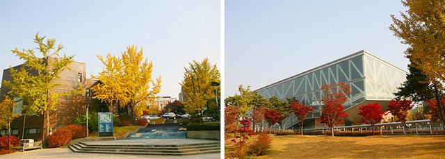 Tuyệt đẹp khung cảnh mùa thu lá đỏ tại Hàn Quốc - Ảnh 5.