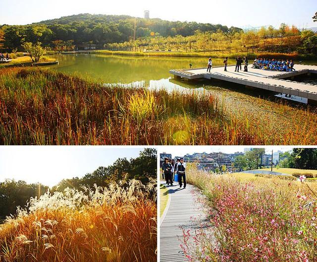 Tuyệt đẹp khung cảnh mùa thu lá đỏ tại Hàn Quốc - Ảnh 3.