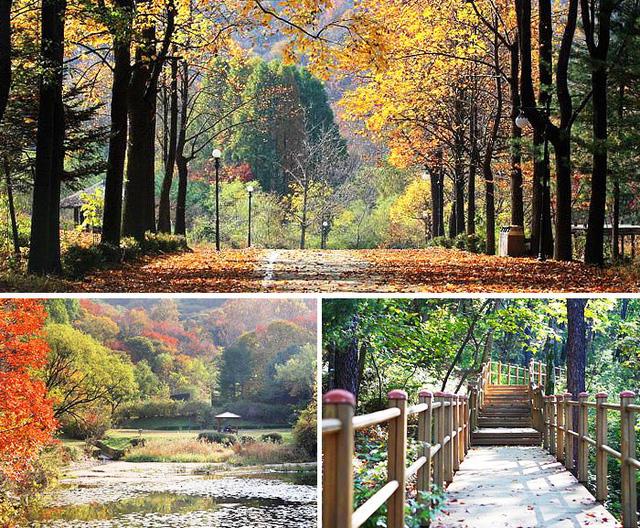 Tuyệt đẹp khung cảnh mùa thu lá đỏ tại Hàn Quốc - Ảnh 2.