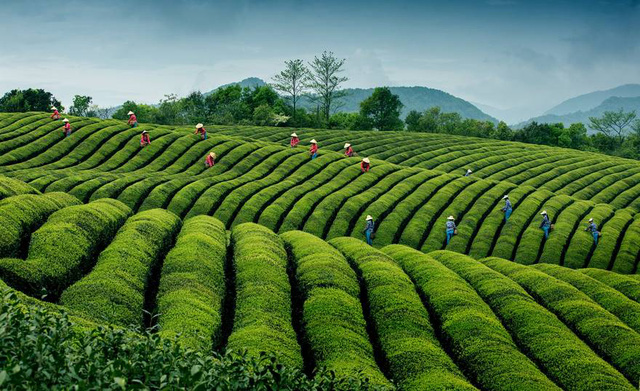 Ảnh chụp ở Việt Nam lọt top những bức ảnh ấn tượng năm 2016 - Ảnh 16.
