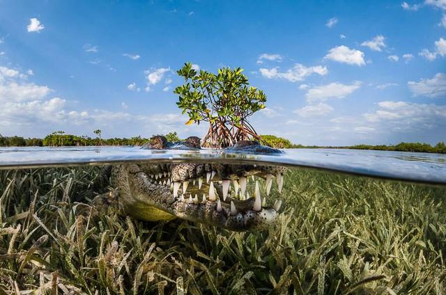 Ảnh chụp ở Việt Nam lọt top những bức ảnh ấn tượng năm 2016 - Ảnh 6.