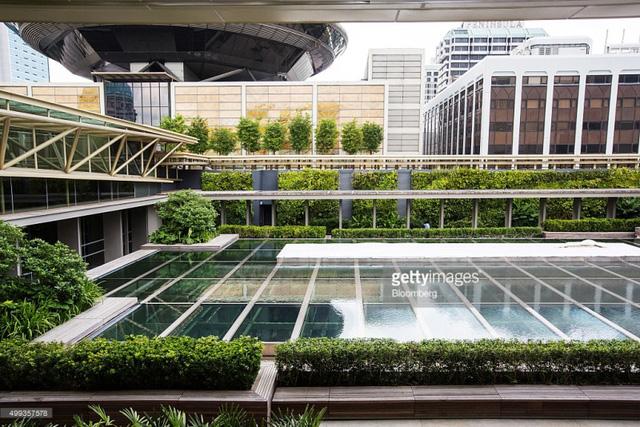 Bí quyết trở thành thành phố trong vườn của Singapore - Ảnh 2.
