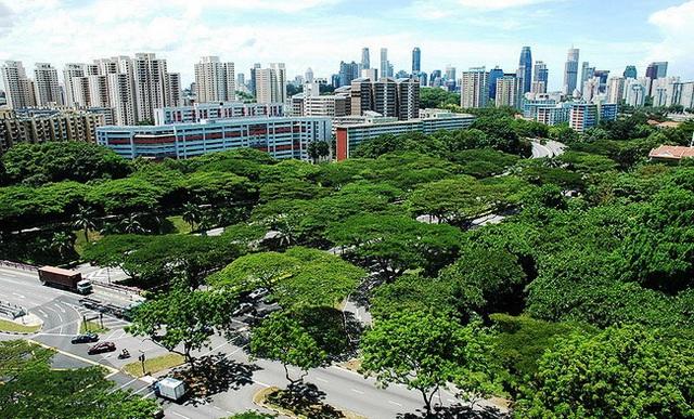Bí quyết trở thành thành phố trong vườn của Singapore - Ảnh 4.