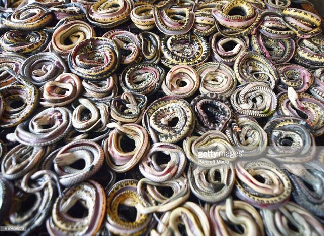 Góc khuất kinh hoàng của ngành công nghiệp thời trang da rắn tại Indonesia - Ảnh 1.