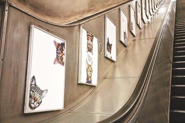 Hàng trăm chú mèo chiếm lĩnh ga tàu điện ngầm tại London - Ảnh 4.