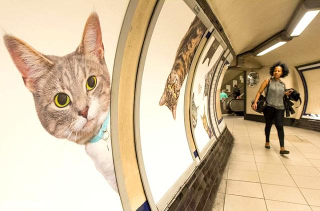 Hàng trăm chú mèo chiếm lĩnh ga tàu điện ngầm tại London - Ảnh 5.