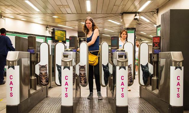 Hàng trăm chú mèo chiếm lĩnh ga tàu điện ngầm tại London - Ảnh 6.