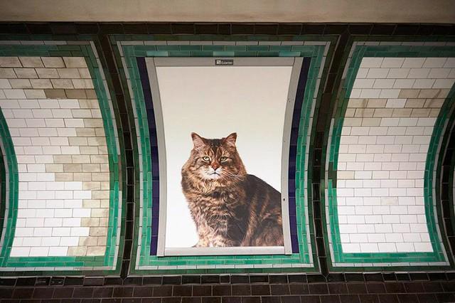 Hàng trăm chú mèo chiếm lĩnh ga tàu điện ngầm tại London - Ảnh 7.