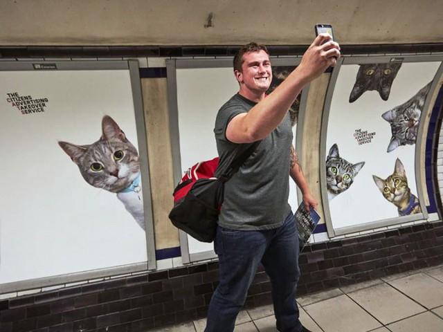 Hàng trăm chú mèo chiếm lĩnh ga tàu điện ngầm tại London - Ảnh 2.