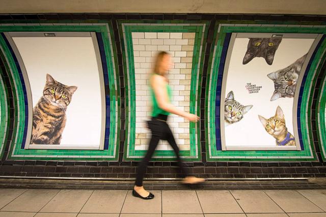 Hàng trăm chú mèo chiếm lĩnh ga tàu điện ngầm tại London - Ảnh 3.