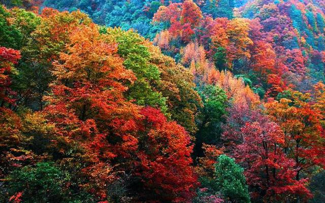 10 điểm ngắm mùa thu rực rỡ ở Trung Quốc - Ảnh 8.