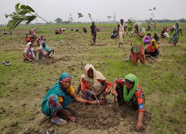 Choáng với màn trồng 66 triệu cây xanh trong nửa ngày ở Ấn Độ - Ảnh 3.
